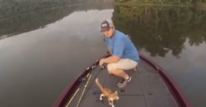 Watch A Casual Fishing Trip Turn Into An Incredible Kitten Rescue
