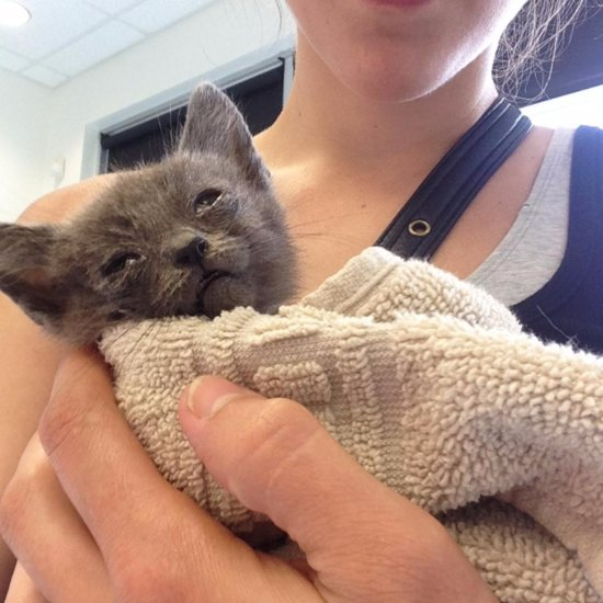 Abandoned Cat Nursed Back to Health