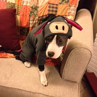 Disney Dog Costumes