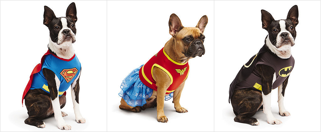 Avengers Assemble! We've Got All the Superhero Costumes Your Dog Needs!