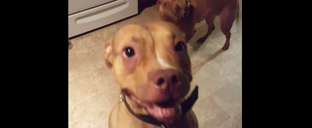 You Will Love These Dogs' Reactions When They Know They're in Trouble