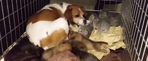 This Is Literally the Sweetest Video of Kitties and Puppies Ever