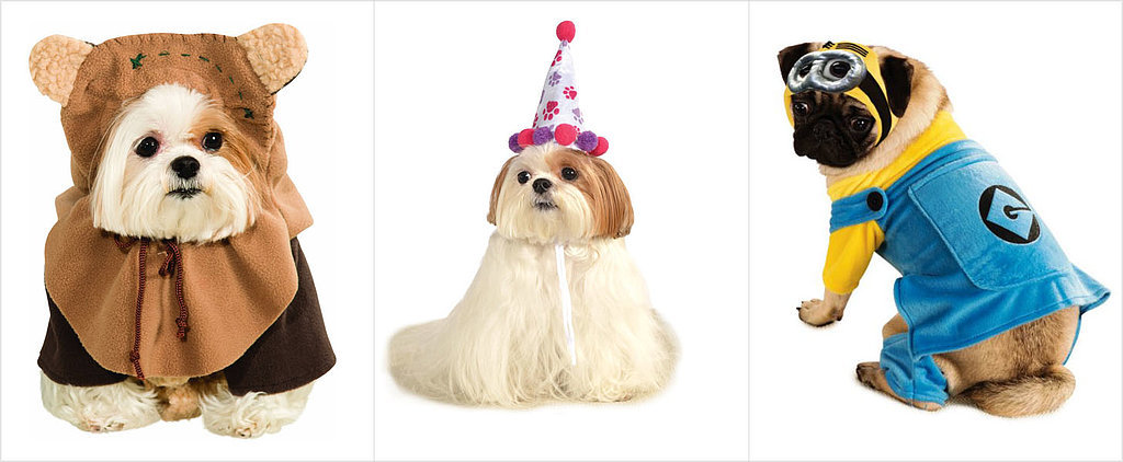 This Year's Top 10 Dog Halloween Costumes