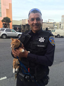 Pet Cat Used by San Francisco Police to Convince Suicidal Man Not to Jump