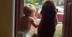 Baby And Dog Go Adorably Bonkers When Dad Comes Home