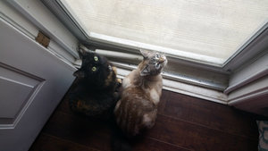 Why My Cats Will Never Go Outside Alone