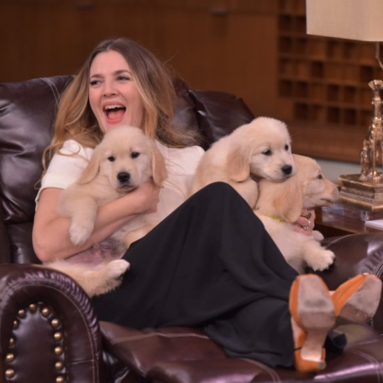Drew Barrymore Plays Pup Quiz on Tonight Show | Video