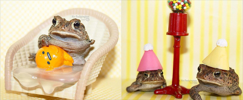 We Kinda Want to Hang Out in the Tiny, Adorable World These Toads Live In