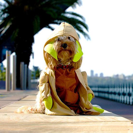 Australia Pet Costumes