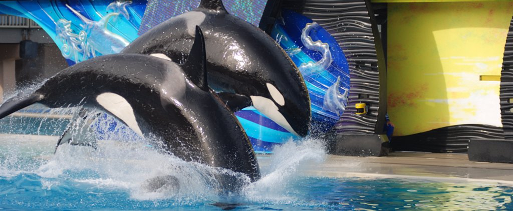 SeaWorld San Diego to Phase Out Killer Whale Shows