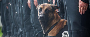 The World Shows Their Love and Respect For Police Dog Killed in Paris Raid