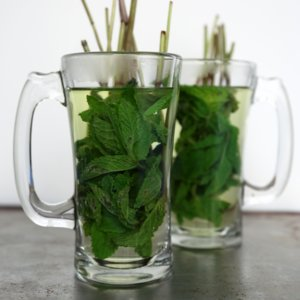 Diet Tip: Curb Cravings With Mint