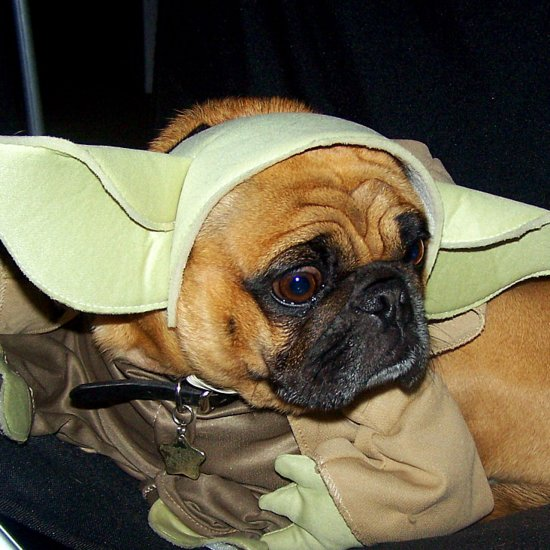 Star Wars Pet Names