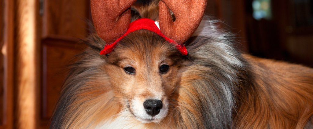 Which State Spends the Most on Their Dogs During the Holidays?