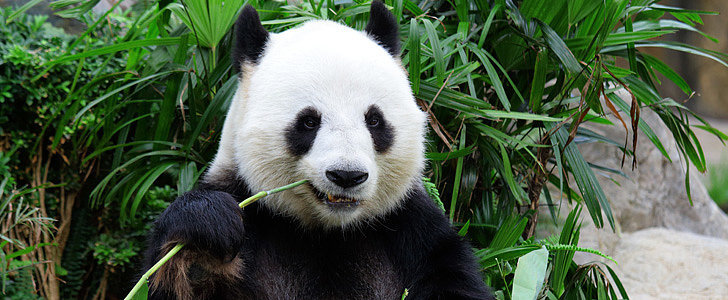 Pandas Need Tinder — Here's Why