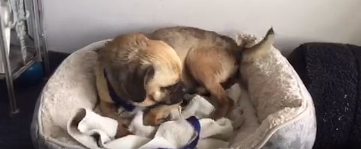 You Will Love This Rescue Dog's Reaction to His Very First Bed