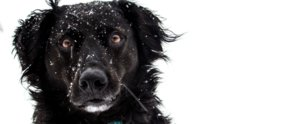 Dog Sees Snow For the First Time . . . Immediately Loses His Cool