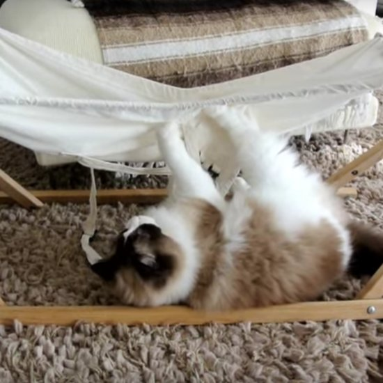 Cat Falling Out of Hammock | Video
