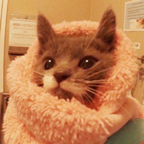 Humane Society's Kitten Nursery Video