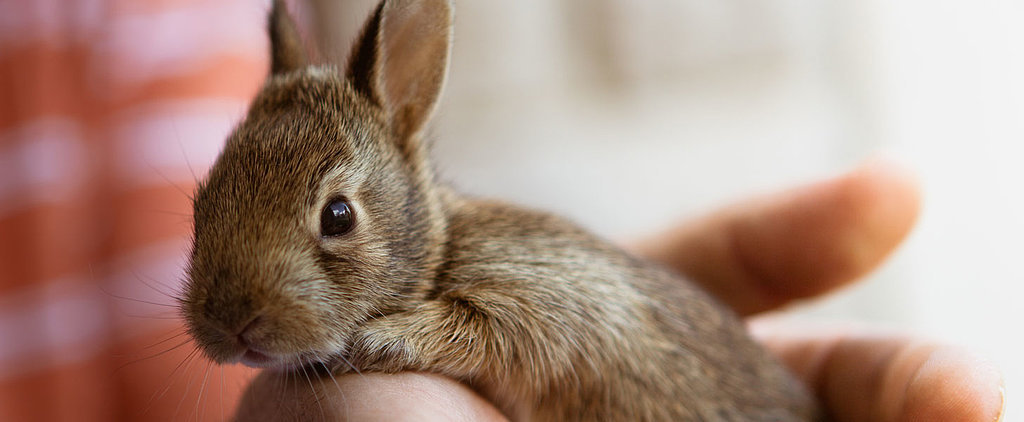 7 Animal Charities Make a Public Plea to End Animal Testing