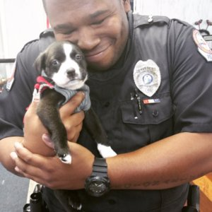 Florida Police Officer Rescues Puppy