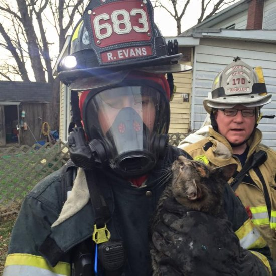 Firefighters Rescue Cats From House Fire
