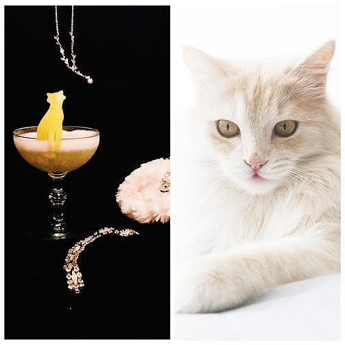 5 Signature Cocktails Based on Cat Breeds
