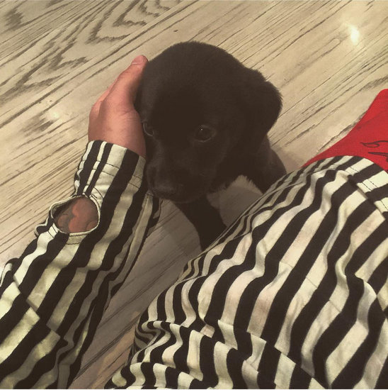 Meet Justin Bieber's New Puppy Phil