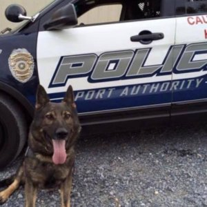 Funeral For Pittsburgh Police Dog
