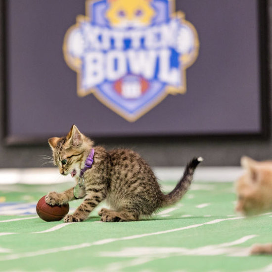 How To Watch The Kitten Bowl