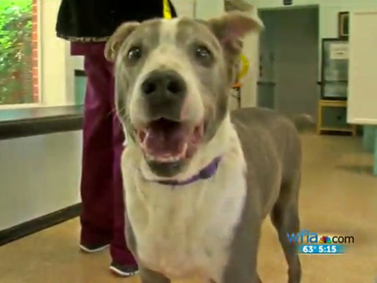 Heartbreaking Letter Helps Shelter Dog Finally Find His Forever Family