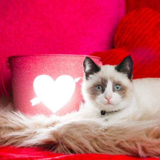 Valentine's Day Dangers For Pets