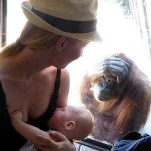 Orangutan Watching Mom Breastfeed Baby at Zoo