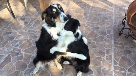 VIDEO: Dogs Remind Us That Sometimes You Just Need a Hug