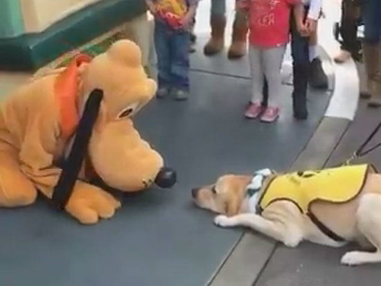 WATCH: Guide Dog Fangirls Over Pluto During Disney Trip