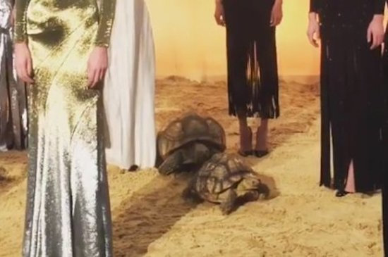 Some Tortoises Totally Had Sex During A Fashion Show For NYFW