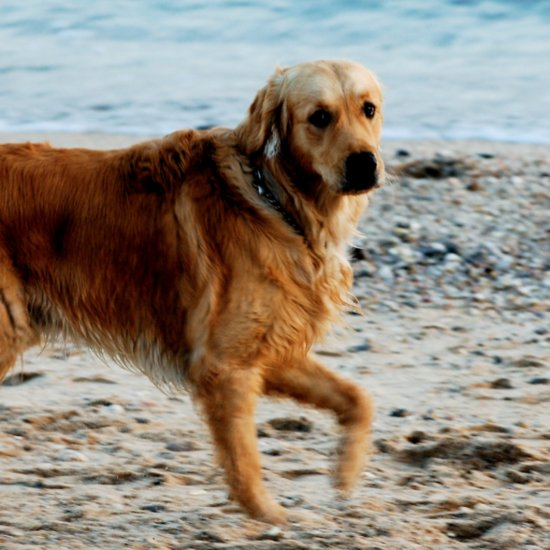 Health Trends For Dogs