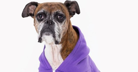 These Dog Models Might Be The Best Thing About American Apparel