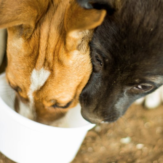 How to Change a Dog's Food