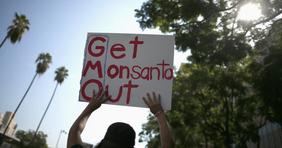 Support For GMOs Rises With Education Level