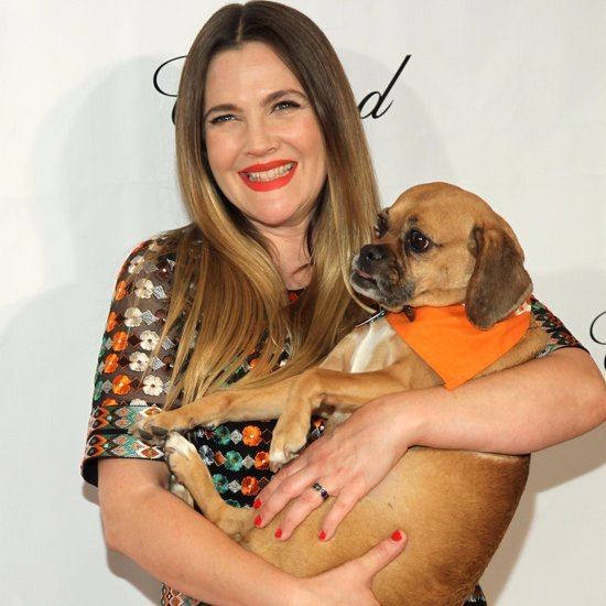 Drew Barrymore at ASPCA Bergh Ball 2016 Pictures