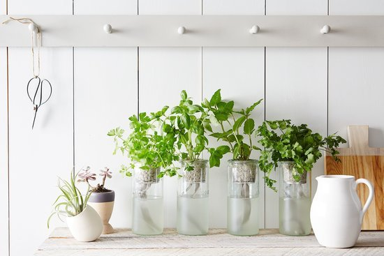 Our Best Tips & Tools for Starting an Indoor Garden