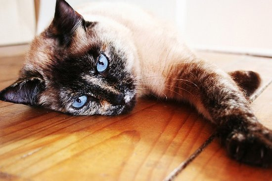 Ask a Vet: What Causes Sudden Fever and Malaise in Cats?
