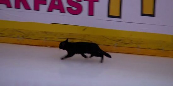 Black Cat Runs Onto Hockey Rink, Likely Dooming San Jose Sharks
