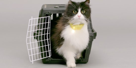 Hilarious Talking Cat Collar Speaks What Your Cat Is Thinking