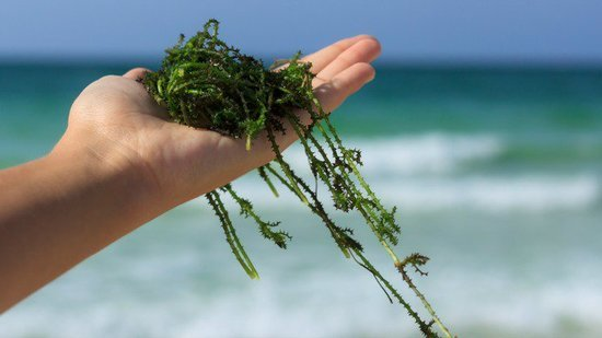 Seaweed In Your Womb Might Be The Secret To Avoiding Unwanted Pregnancies