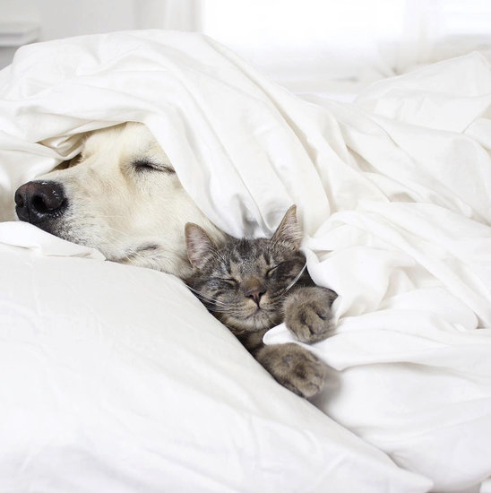 This Is the Instagram Trio to Follow for Pet-Sleepover FOMO