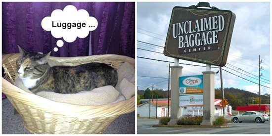 5 Real Tourist Attractions Cats Would Visit on Vacation