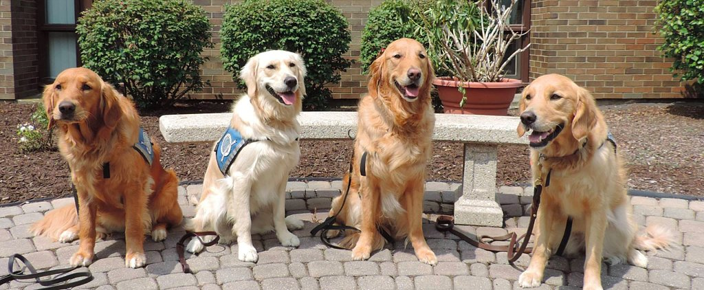 Meet the Comfort Dogs From Around the Country Helping the Orlando Victims