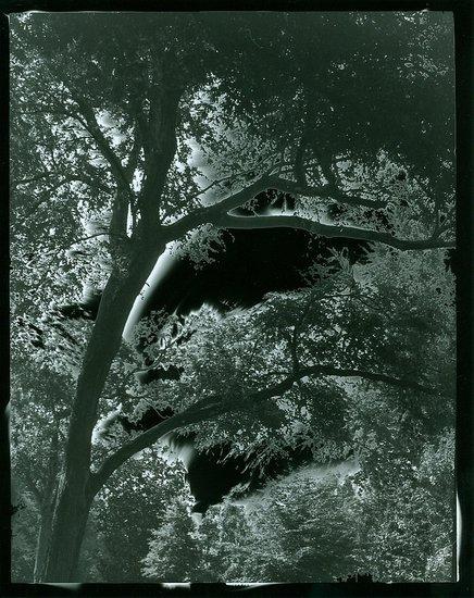 Solarized Tree